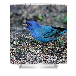 Tiny Indigo Bunting Shower Curtain
