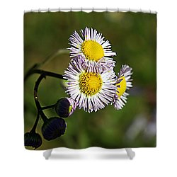 Tiny Little Weed -2- Shower Curtain