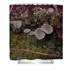Tiny Mushrooms  Shower Curtain by Jeff Swan