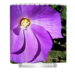 Tiny Purple Flower Shower Curtain