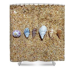 Tiny Seashells On The Sand Shower Curtain