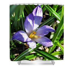 Tiny Violet Shower Curtain