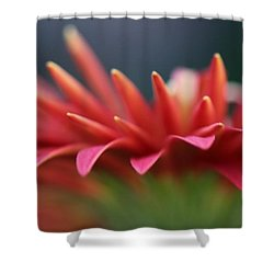 Tip Of The Flower Petals Shower Curtain