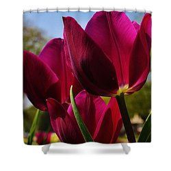 Tip Toe Through The Tulips Shower Curtain