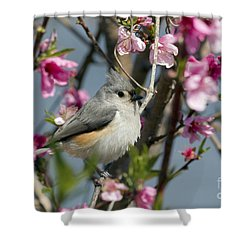 Titmouse And Peach Blossoms Shower Curtain