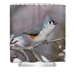 Shower Curtain featuring the photograph Titmouse Song - D010023 by Daniel Dempster