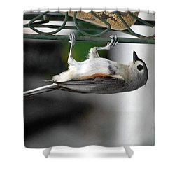 Titmouse Trickery Shower Curtain by DigiArt Diaries by Vicky B Fuller