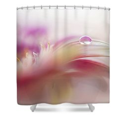 Shower Curtain featuring the photograph To Live In Dream 2. Macro Gerbera by Jenny Rainbow