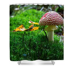Toadstool Shower Curtain by Andreas Levi