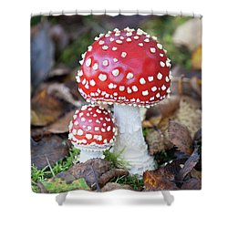 Toadstools In The Woods Vi Shower Curtain