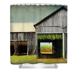 Tobacco Drying Shower Curtain