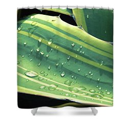 Toboggan Shower Curtain by Beto Machado