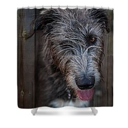 Toby, The Irish Wolfhound Pup Shower Curtain