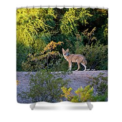 Today's Coyote Shower Curtain
