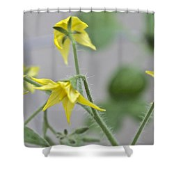 Tomato Babies 1 Shower Curtain
