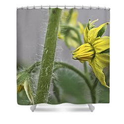 Tomato Babies 3 Shower Curtain