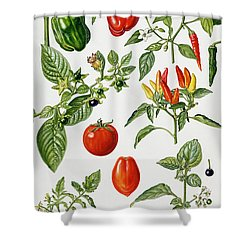 Tomatoes And Related Vegetables Shower Curtain by Elizabeth Rice