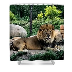 Tomo, The King Of Beasts Shower Curtain