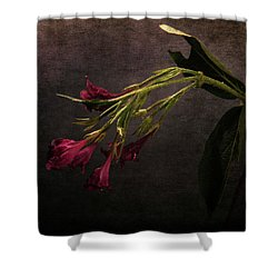 Shower Curtain featuring the photograph Toning Down by Randi Grace Nilsberg