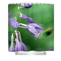 Too Busy To Notice Shower Curtain by Amanda Barcon