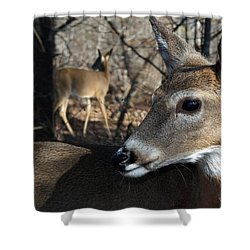 Too Cool Shower Curtain by Bill Stephens