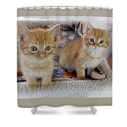 Too Cute Shower Curtain by Rhonda Chase