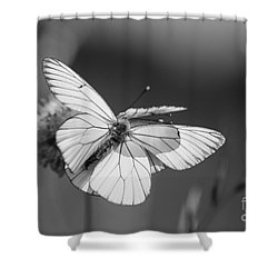 Too Many Wings Shower Curtain
