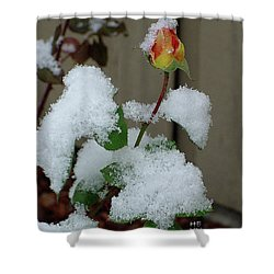 Too Soon Winter - Yellow Rose Shower Curtain