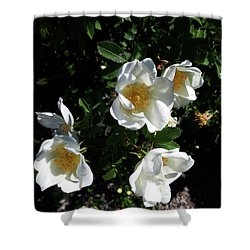 Too Thorny To Pick But Lovely All The Same Shower Curtain