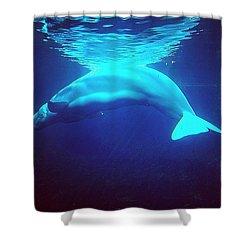 Beautiful Whale Shower Curtain