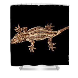 Top View Of Gargoyle Gecko, Rhacodactylus Auriculatus Staring Isolated On Black Background. Native T Shower Curtain