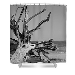 Toppled Tree Shower Curtain
