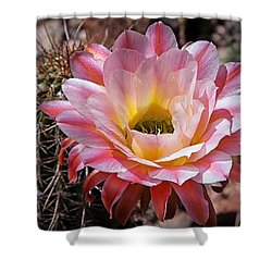 Torch Cactus Flower Shower Curtain by Elaine Malott