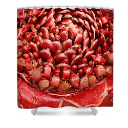 Torch Ginger 1 Shower Curtain