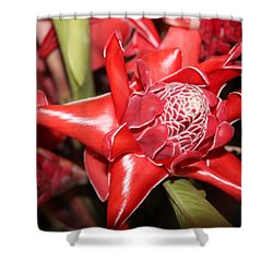 Torch Ginger Shower Curtain