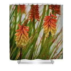 Torch Lily At The Beach Shower Curtain by Sandi OReilly