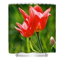 Toronto Tulip Shower Curtain by Steve Karol