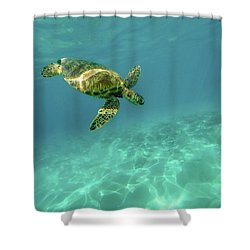Tortoise Shower Curtain by Happy Home Artistry