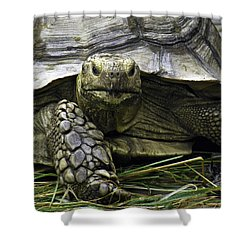 Shower Curtain featuring the photograph Tortoise's Stare by Betty Denise
