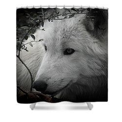 Totem, No. 24 Shower Curtain