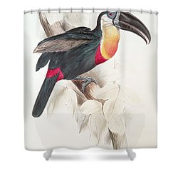 Toucan Shower Curtain by Edward Lear