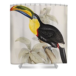 Toucan Shower Curtain by John Gould