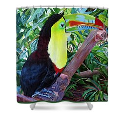 Toucan Portrait 2 Shower Curtain