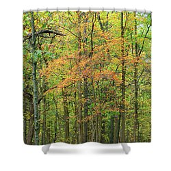 Touch Of Autumn Shower Curtain by Cedric Hampton