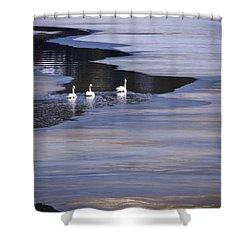 Tourist Swans Shower Curtain