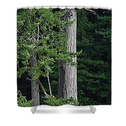 Towering Shower Curtain