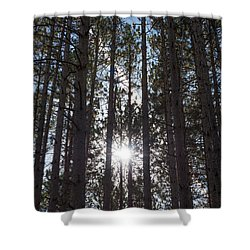 Towering Pines Shower Curtain