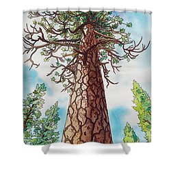 Towering Ponderosa Pine Shower Curtain by Terry Holliday