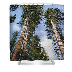 Towering Sequoias Shower Curtain