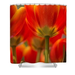 Shower Curtain featuring the photograph Towering Tulips  by Julie Andel
